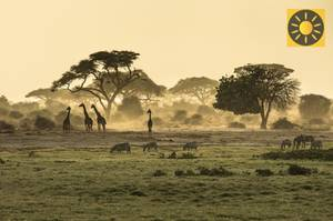 Kenia Safari im Nationalpark